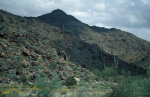 Photograph of Sonoran Desert, AZ