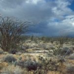Photograph of desert, sw AZ