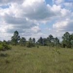 Photograph of savanna in Belize