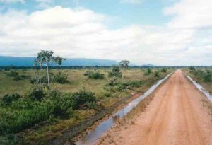 Photograph of road through cerrado in se Bolivia