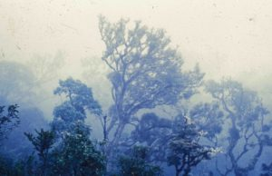 Photograph of cloud forest, Bolivia