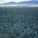 Photograph of landscape in desert, sw CA, summer 1999