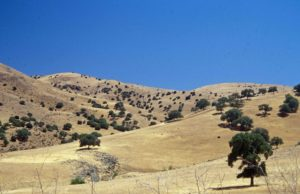 Photograph of oak savanna in s CA