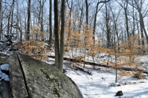 Photograph of woods at Cranberry Lake Preserve, NY