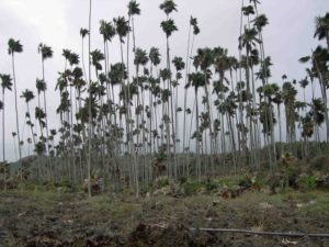 Photograph of vegetation in Guantanamo, Cuba