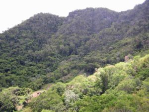 Photograph of Sierra Santa Maria del Loreto, Cuba