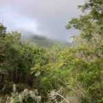 Photograph of cloud forest vegetation in Barahona, Dominican Republic
