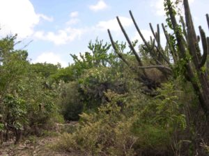 Photograph of vegetation near Pedernales, Dominican Republic