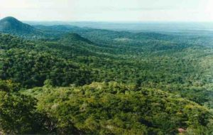 View of forest canopy, Jatun Sacha Biological Reserve, Ecuador
