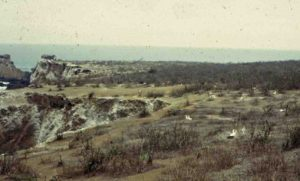 Photograph of dry scrub and boobies, Isla de la Plata, Ecuador