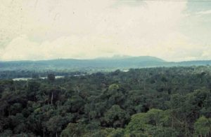 View of forest canopy, Jatun Sacha Biological Reserve, Ecuador