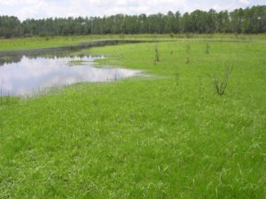 Photograph of basin marsh, Gar Pond area, FL