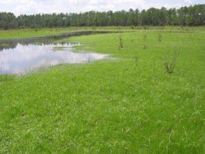 Photograph of basin marsh, Gar Pond area, FL