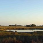 Photograph of tidal marsh, Spring Creek, FL