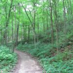 Photograph of woods at Fox Ridge State Park, IL
