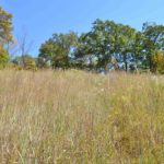 Photograph of Newman Prairie at Salt Lick Point, IL