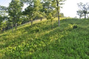 Photograph of Cave Creek glade, IL
