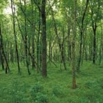 Photograph of woods at Ft Boonesboro State Park, KY