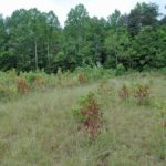 Photograph of Pulaski County, KY, sundew site