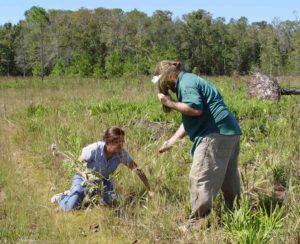 Photograph of 2 botanists collecting plants in FL