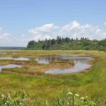 Photograph of marsh in Reid State Park, ME