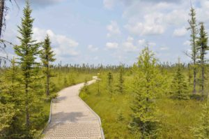 Photograph of Big Bog, MN