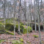 Photograph of woods in St. Francois State Park, MO
