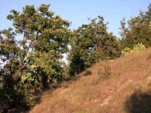Photograph of vegetation in Michoacan, Mexico