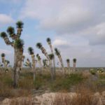 Photograph of vegetation in Mexico