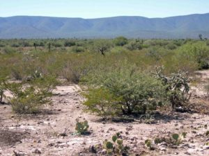 Photograph of desert scrub in Mexico