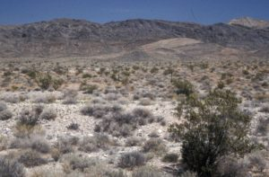 Photograph of desert in Nye County NV