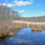 Photograph of marsh, Cranberry Lake Preserve, NY