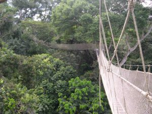 Photograph of Amazon canopy walkway, Peru