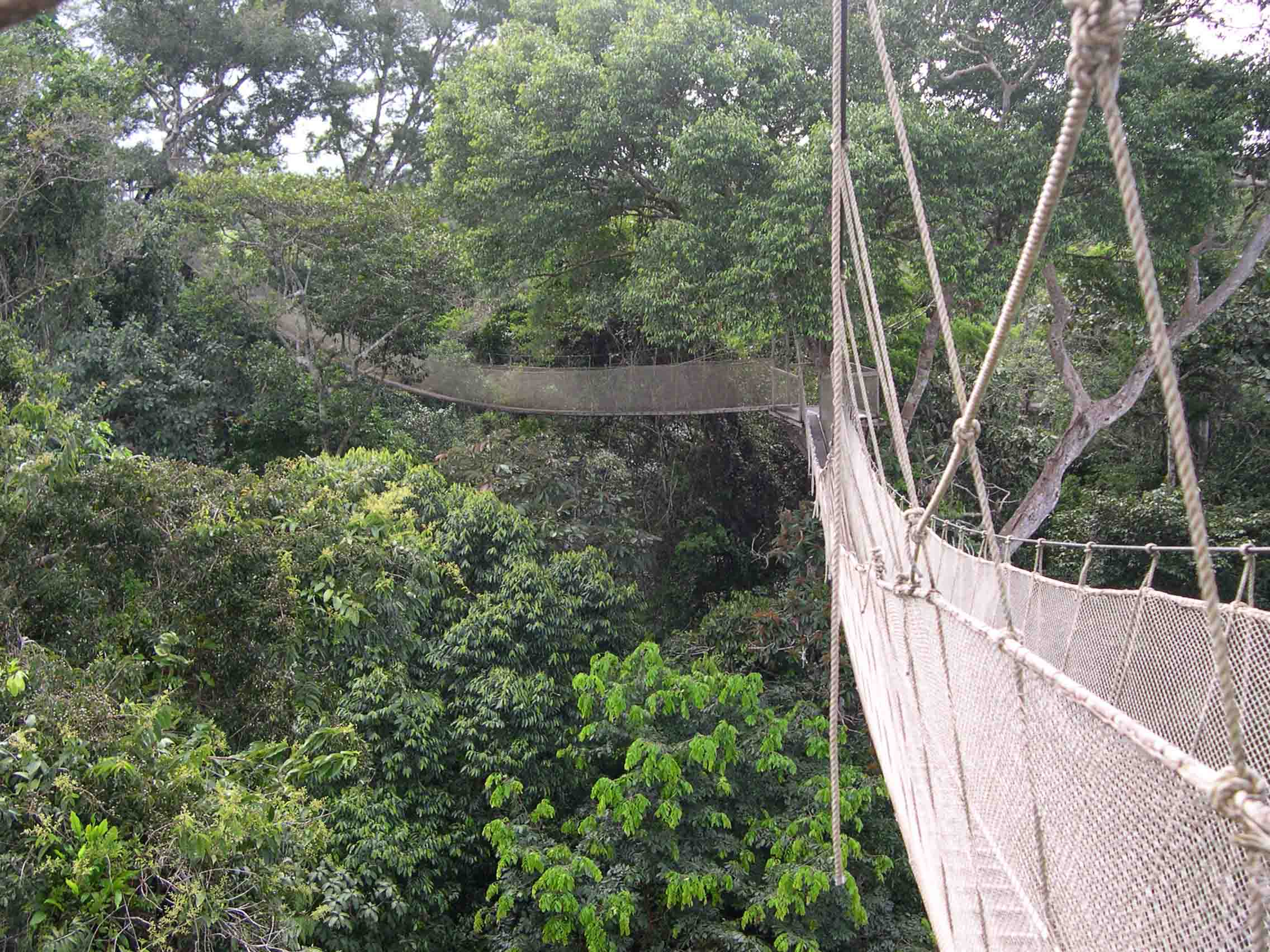 Amazon canopy walkway Peru Jul 2004 & Amazon canopy walkway Peru Jul 2004 u2013 J. Richard Abbott u2013 Botanist
