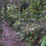 Photograph of rainforest near Iquitos, Peru