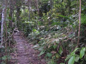 Photograph of rainforest near Iquitos, Peru