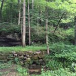 Photograph of woods at Keel Spring, TN
