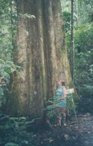 Photograph of Richard Abbott in Ecuador near large tree