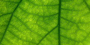 Header photograph of a leaf